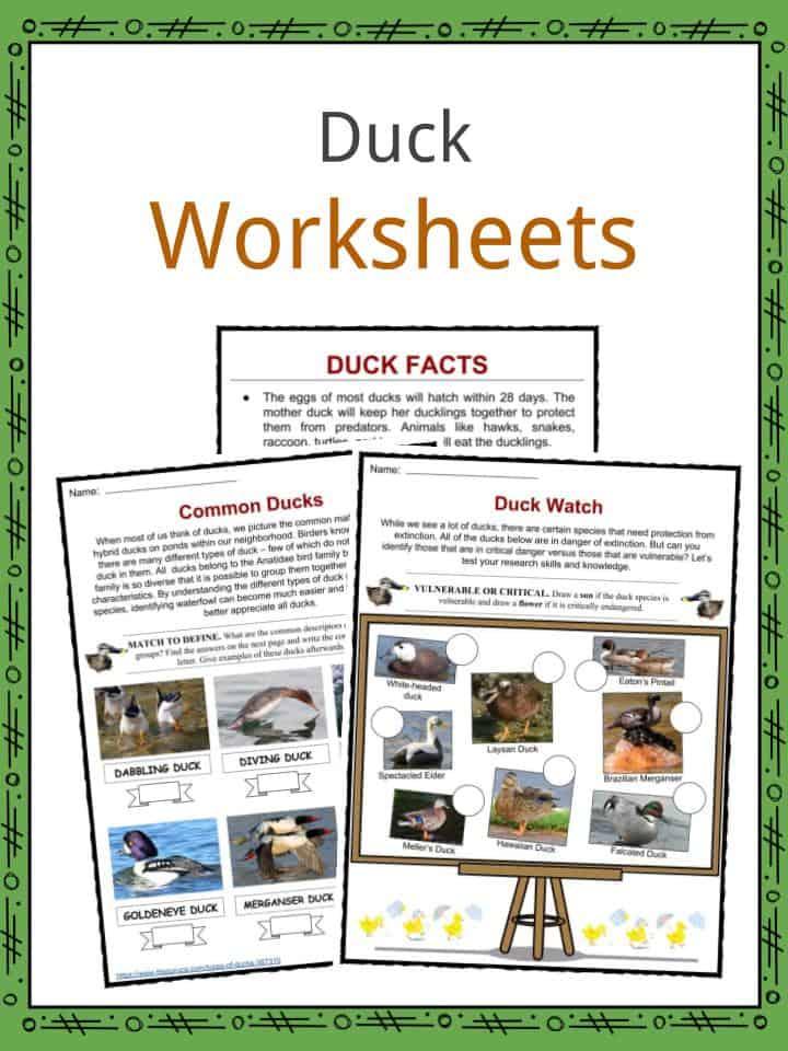 Duck Worksheets