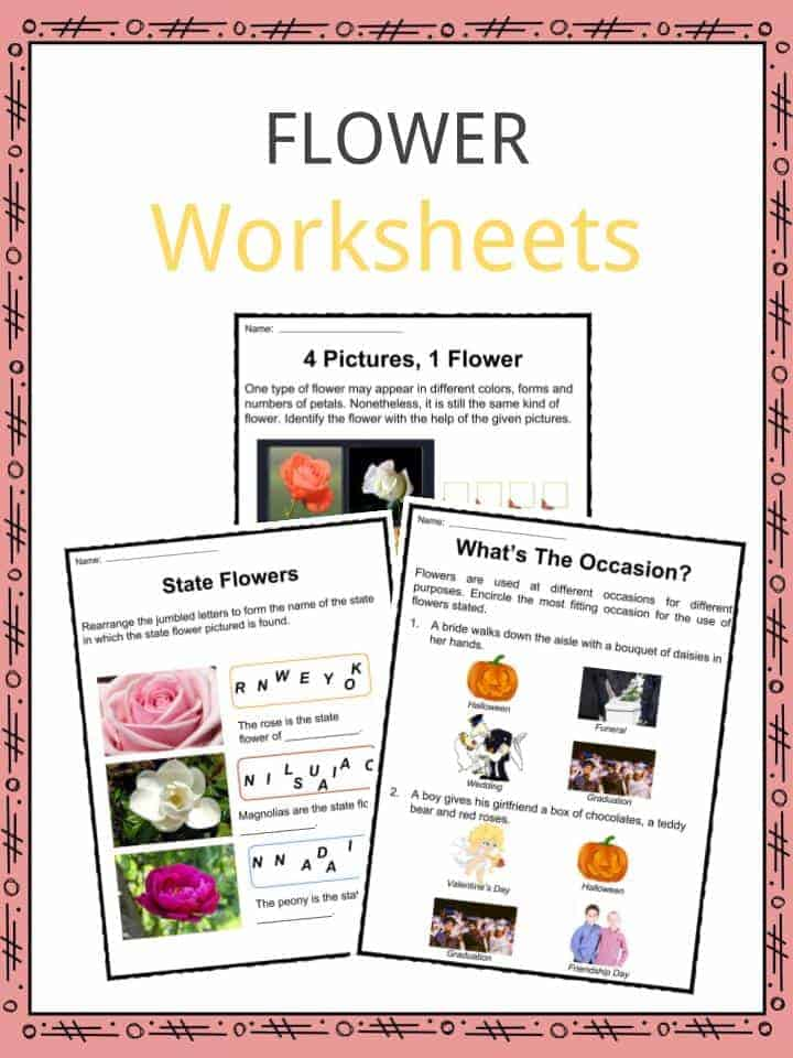 Flower Facts, Worksheets, Types & History For Kids