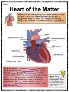 The Human Body Facts Worksheets amp Key Systems For Kids