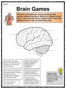 this download includes the following worksheets: bright spark: the brain
