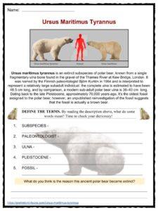 are polar bear keystone species worksheet my site. Black Bedroom Furniture Sets. Home Design Ideas