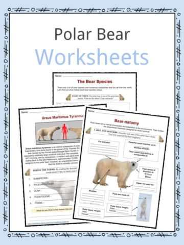Polar Bear Worksheets