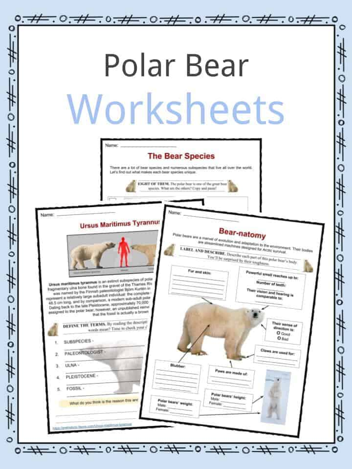polar bear facts worksheets habitat amp species