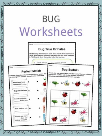 Bug Worksheets