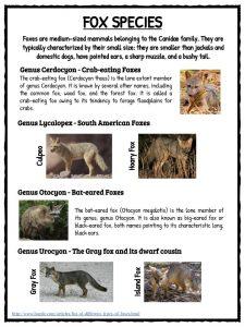 fox facts habitat information amp worksheets for kids