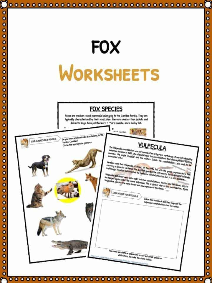 Fox Facts Habitat Information Worksheets For Kids – Habitat Worksheet