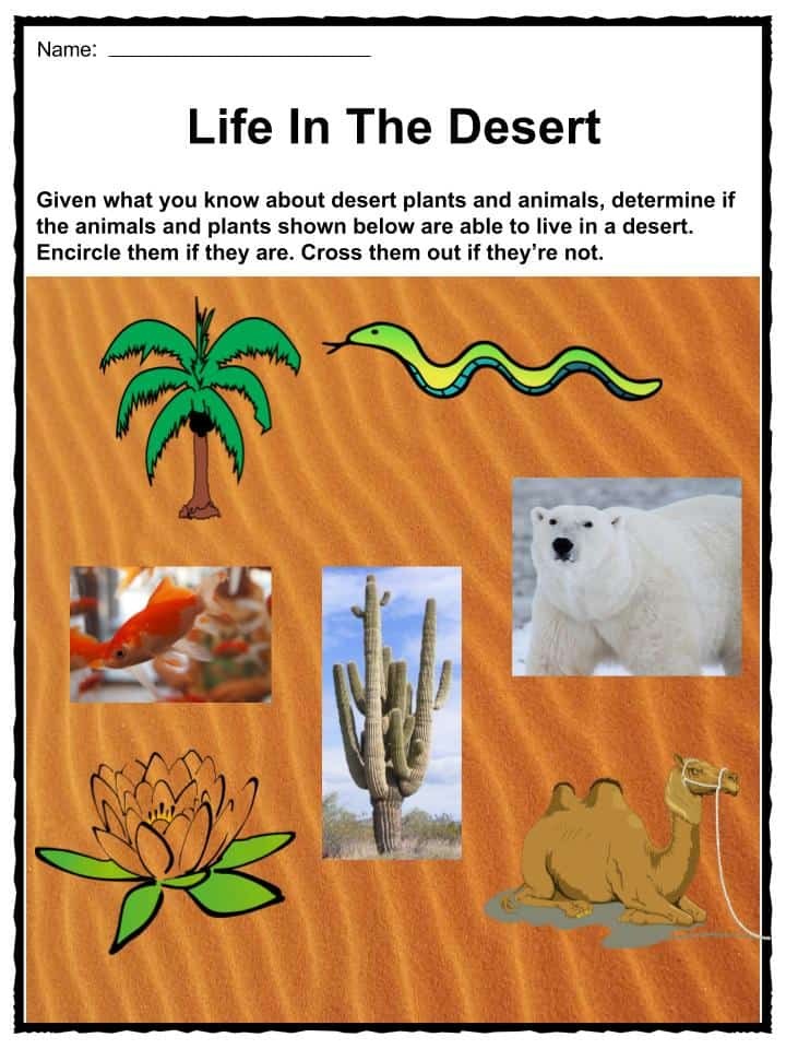 deserts lab worksheet Planet earth movie worksheet: as of its release in early 2007, planet earth is quite simply the greatest nature/wildlife series ev.