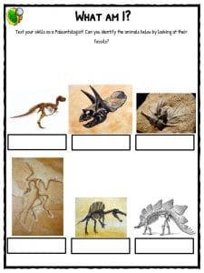 Fossil Facts & Worksheets For Kids | History and Famous Sites