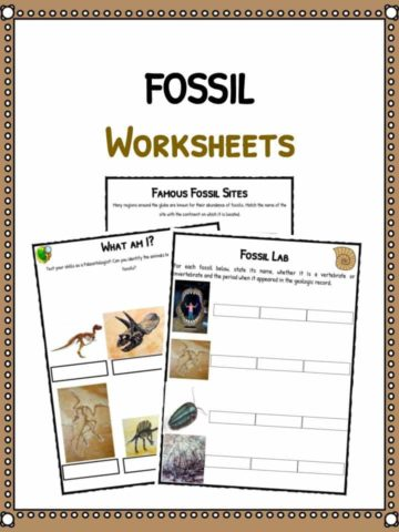 Fossil Worksheets & Facts