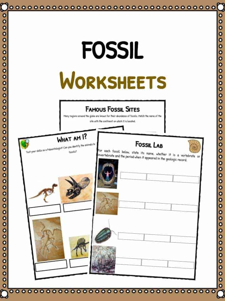 Fossil Facts Worksheets For Kids – Fossil Worksheet