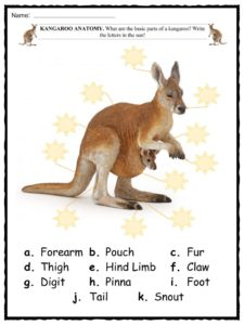 kangaroo facts worksheets habitat species amp diet for kids