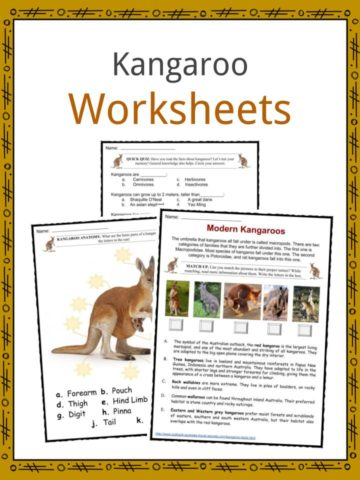 Kangaroo Worksheets