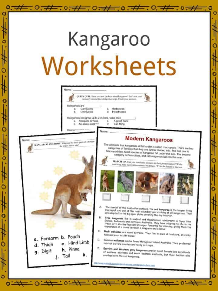 kangaroo facts worksheets habitat species diet for kids. Black Bedroom Furniture Sets. Home Design Ideas
