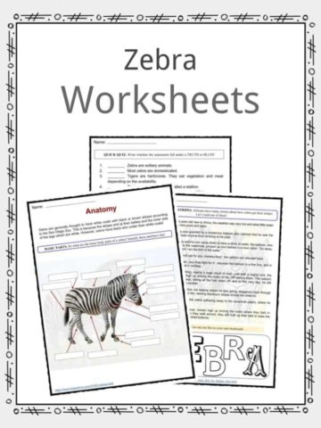 Zebra Worksheets