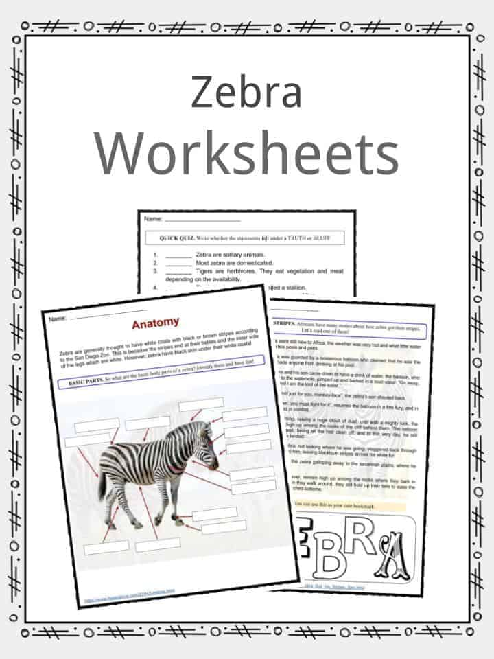 Zebra Facts, Worksheets, Species & Habitat Information For Kids
