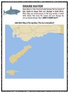 Great White Shark Facts, Worksheets & Habitat Information ...