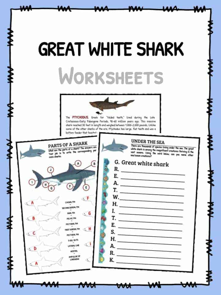 Great White Shark Facts Worksheets Habitat Information For Kids – Shark Worksheets