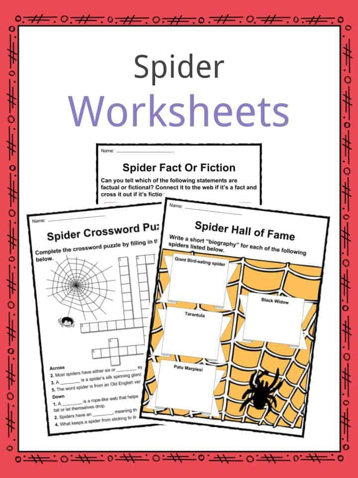 Spider Facts, Worksheets, Species & Habitat Information For Kids