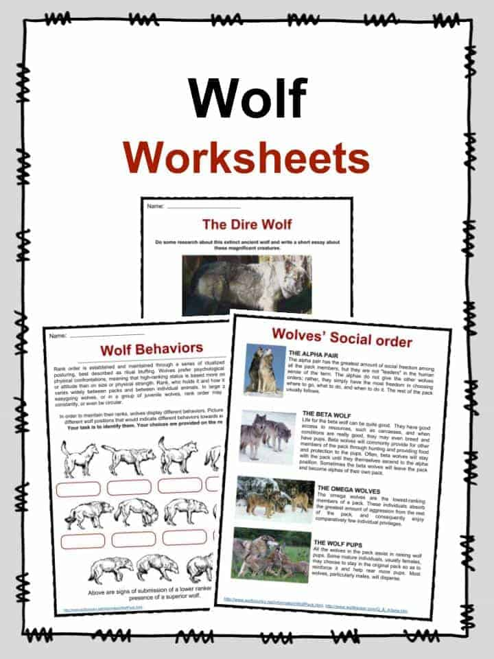 Wolf Facts, Worksheets & Habitat Information For Kids