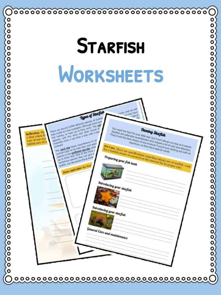Starfish Facts, Information and Worksheets | Teaching Resources