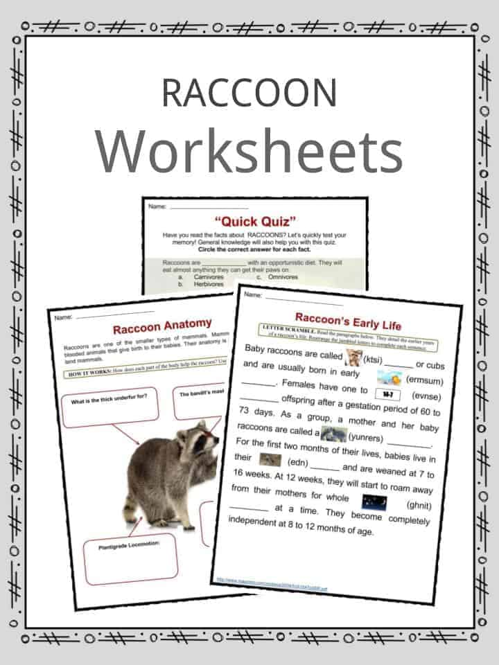 Raccoon Worksheets