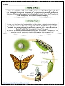 science insect life cycle worksheets science best free printable worksheets. Black Bedroom Furniture Sets. Home Design Ideas