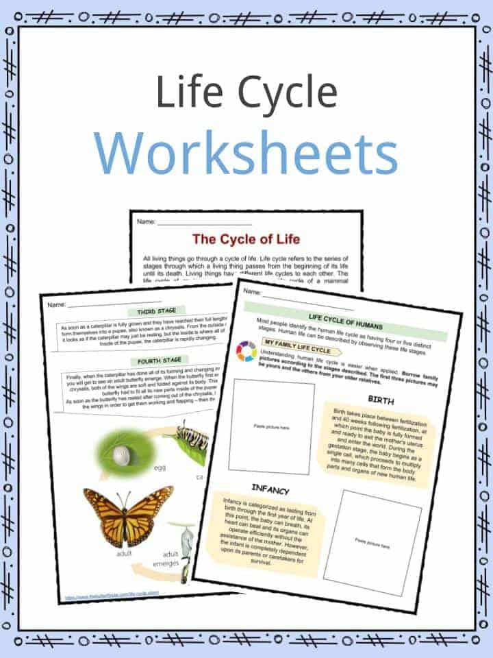 life cycle facts worksheets examples stages of life for kids. Black Bedroom Furniture Sets. Home Design Ideas