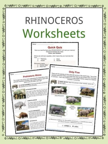 Rhinoceros Worksheets