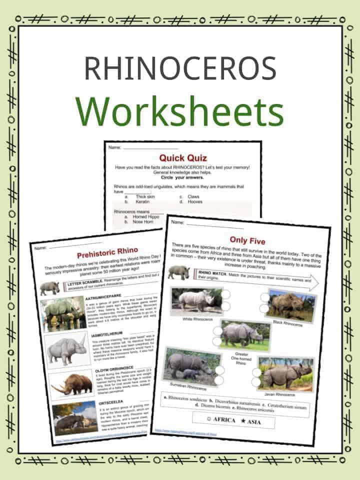 Rhinoceros Facts, Worksheets, Species, Types & Habitat For Kids