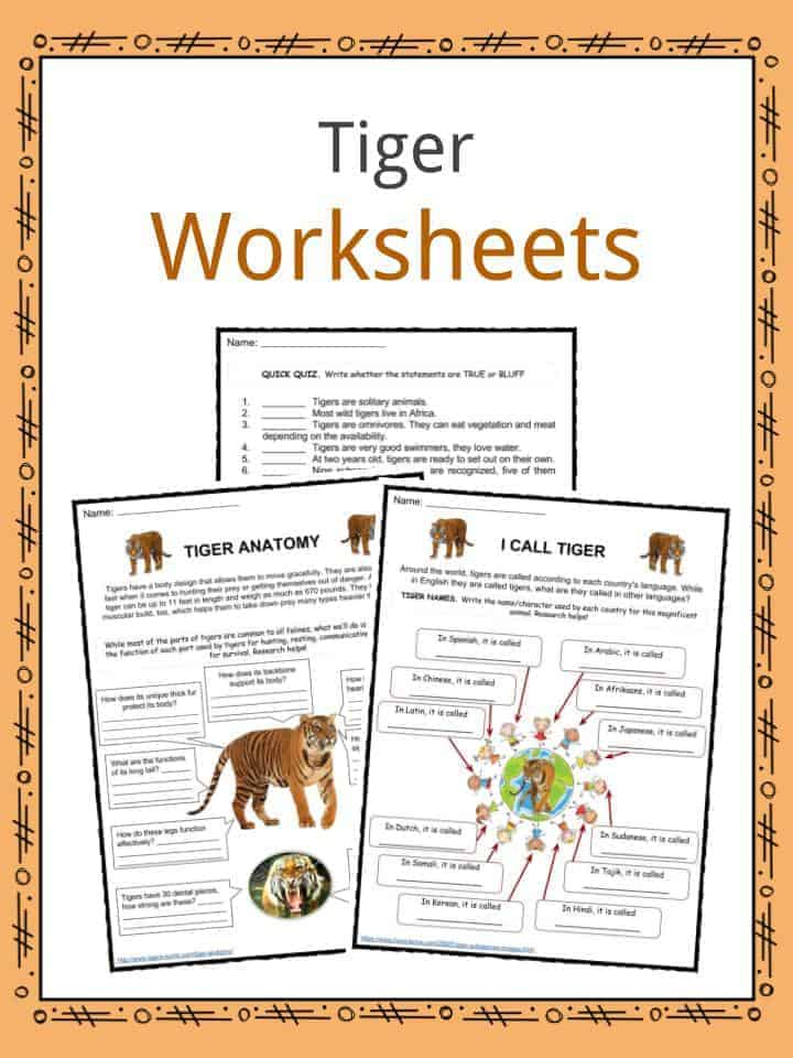 Tiger Facts, Worksheets, Diet, Habitat & Information For Kids