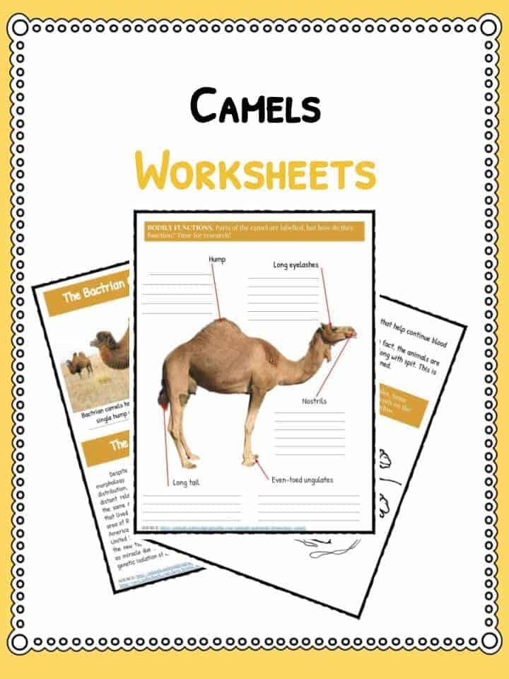 Camel Facts Information Worksheets For Kids Teaching Resources