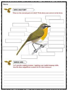 Bird anatomy worksheet