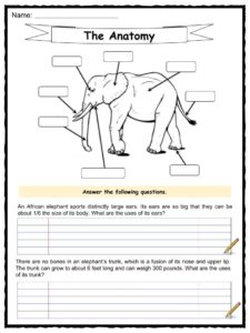 elephant facts worksheets habitat and information for kids. Black Bedroom Furniture Sets. Home Design Ideas