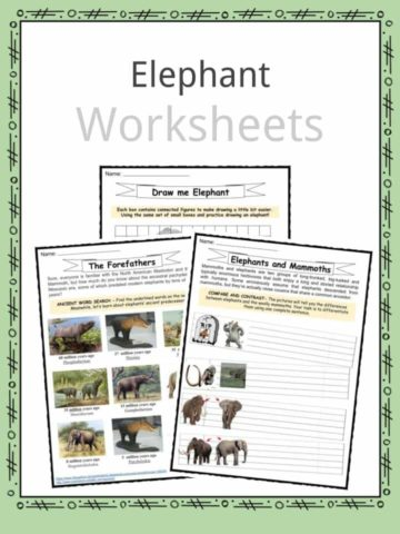 Elephant Worksheets