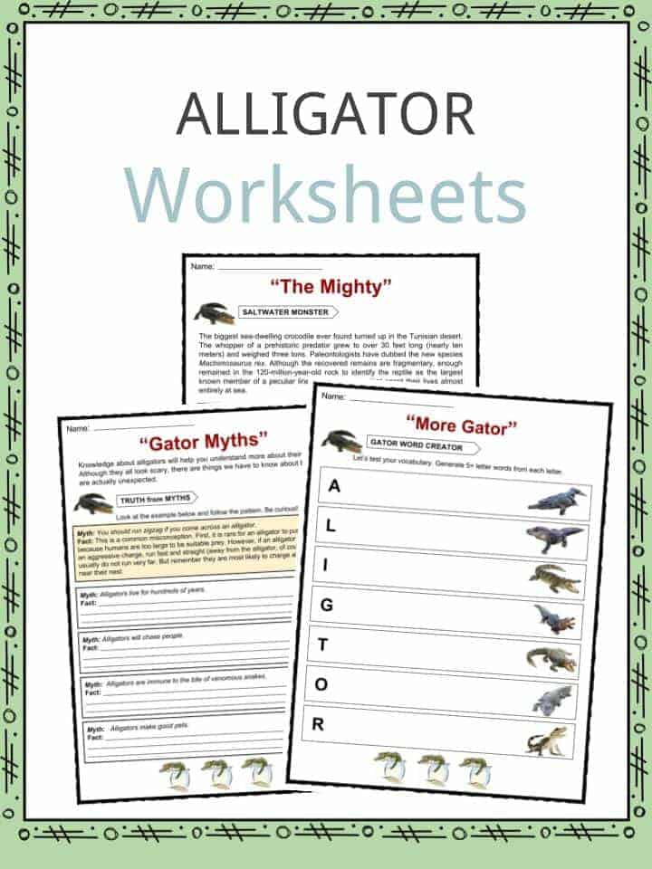 Alligator Worksheets