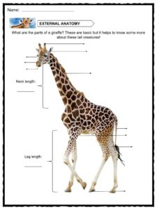 Bni Gains Worksheet Pdf Giraffe Facts Worksheets  Information For Kids Worksheets On Money with Isotope Practice Worksheet Answers Pdf Download Includes The Following Worksheets Math Worksheets Long Division Word