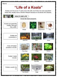 Lifecycle as well Px Evolution Pl besides Forest Animal Worksheets moreover Fee Ab A Fcb F E besides C Fcb A Ff F A F Ede Aa C C E Bee Activities Worksheets For Kids. on life cycle of a mammal worksheet