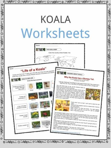 Koala Worksheets