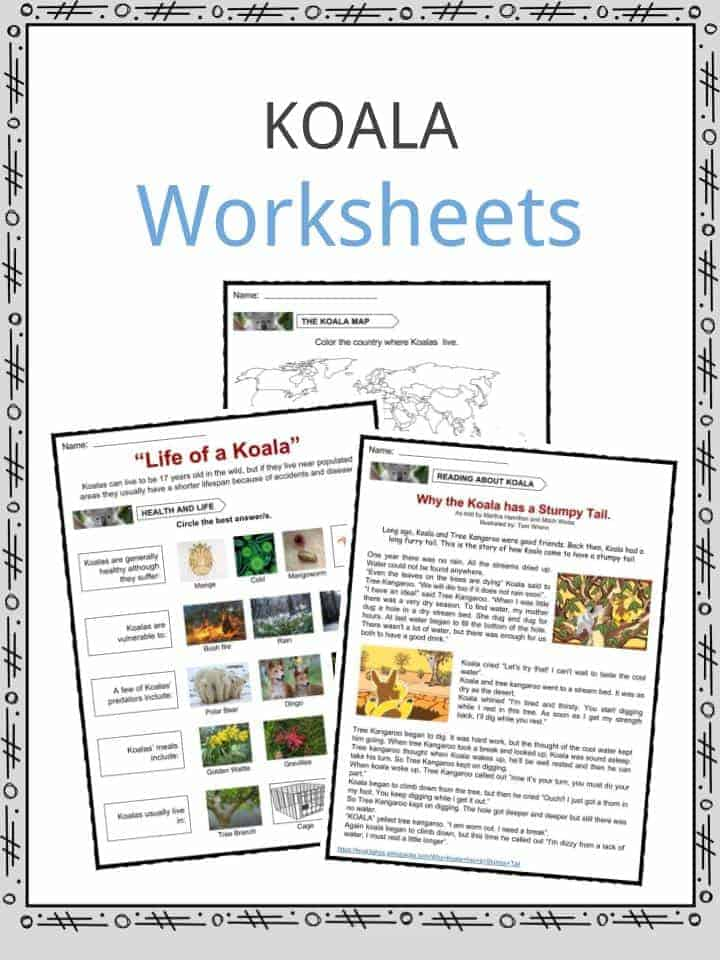 koala facts worksheets information for kids  the koala facts worksheets