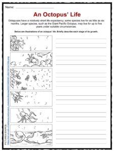 Octopus Facts, Worksheets & Habitat Information For Kids