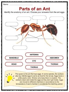 autobiography of an ant