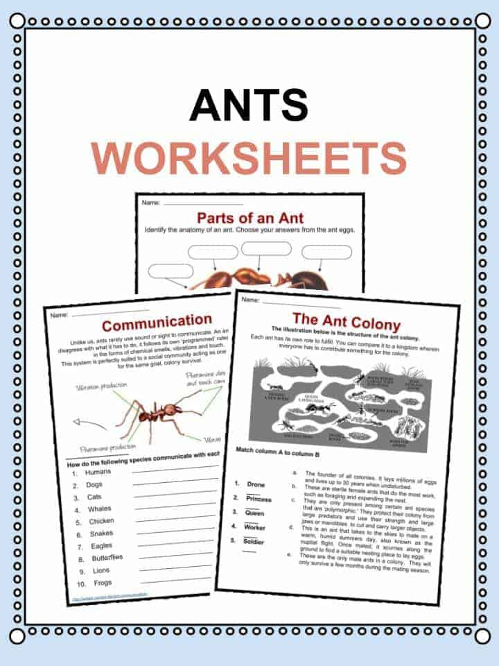 Ant Facts Worksheets Information For Kids – Teach Your Child to Read in 100 Easy Lessons Worksheets