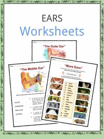 Ears Worksheets