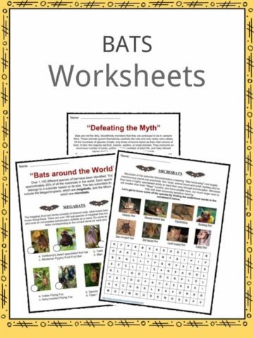 Bat Worksheets