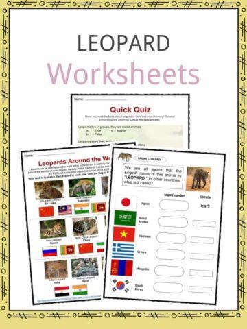 Leopard Worksheets