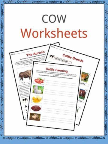 COW Worksheet