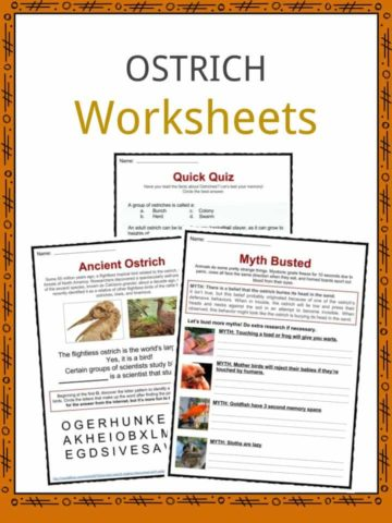 Ostrich Worksheets