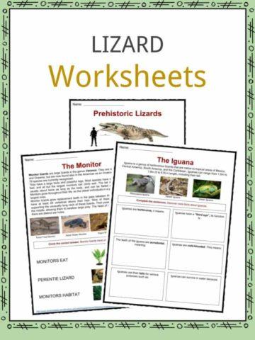 Lizard Worksheets