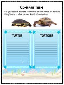 essay on my pet turtle