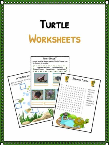 Turtle Facts & Worksheets